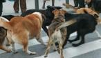 αδεσποτα σκυλια
